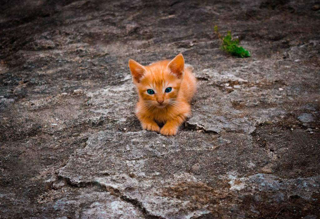 Eine Katze halt Symbolbild für CAT-Tools (Wortspiel)